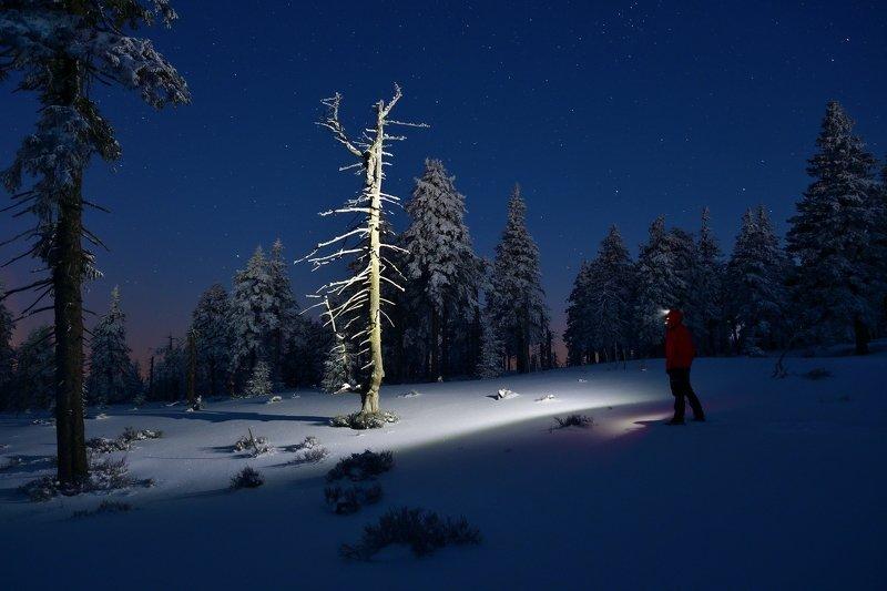 winter, snow, sunrise, czech republic, night, stars, tree, What an interesting treephoto preview