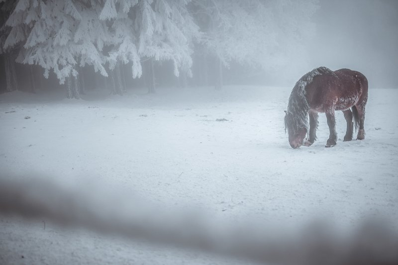 horse, landscape, nature, winter, snow, ice, animal, fog, mist, ice, cold Frozen horsephoto preview