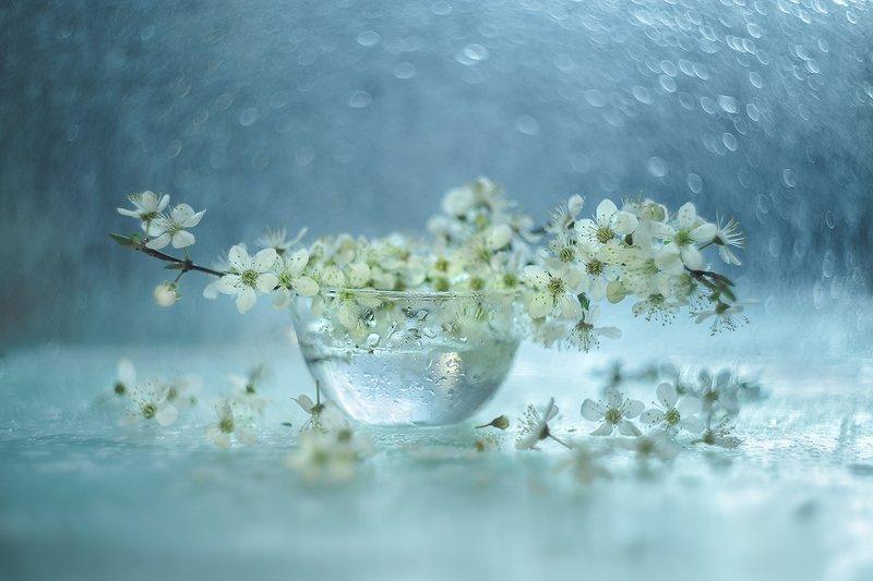 macro,nature,stil live, martwa natura, przyroda.kwiaty,flowers photo preview