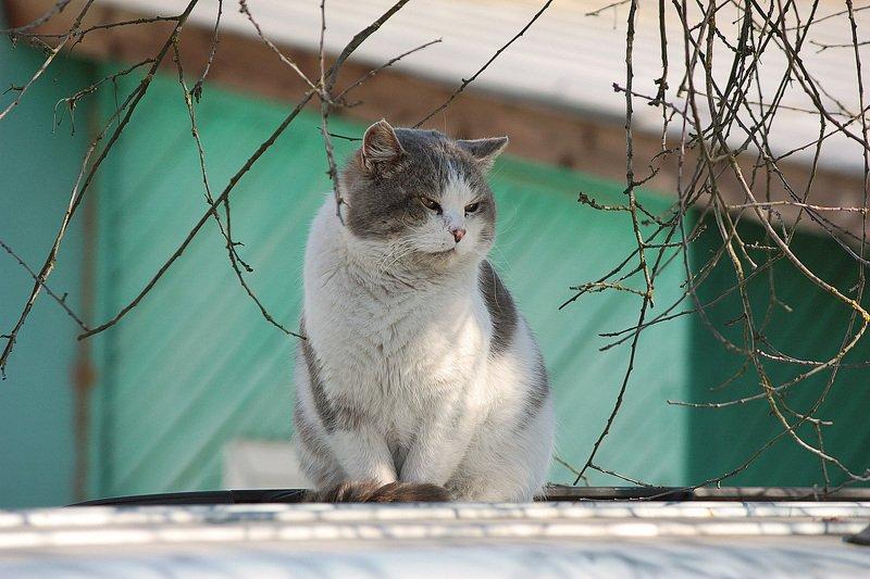 кот Мартовскийphoto preview