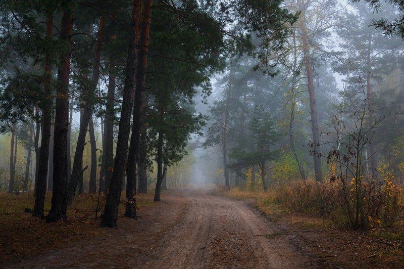 лес, осень, октябрь, утро, рассвет, туман Тихий октябрьphoto preview