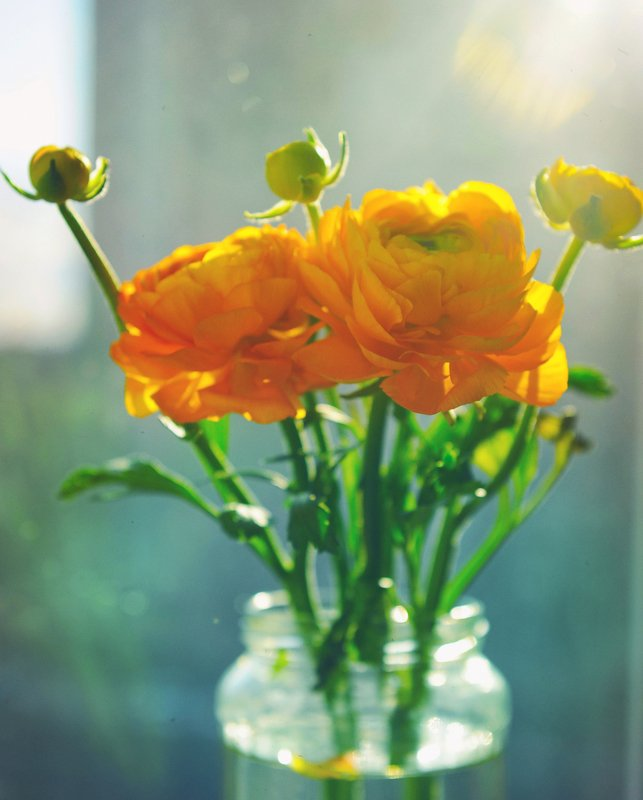 City\'s flowersphoto preview