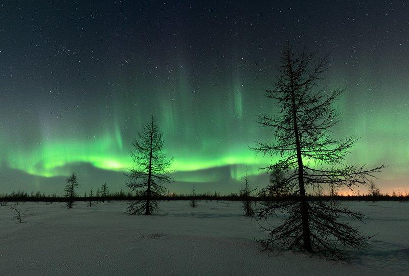 сияние, северное, север, астро, небо, ночь, ямал, сибирь Северное сияниеphoto preview