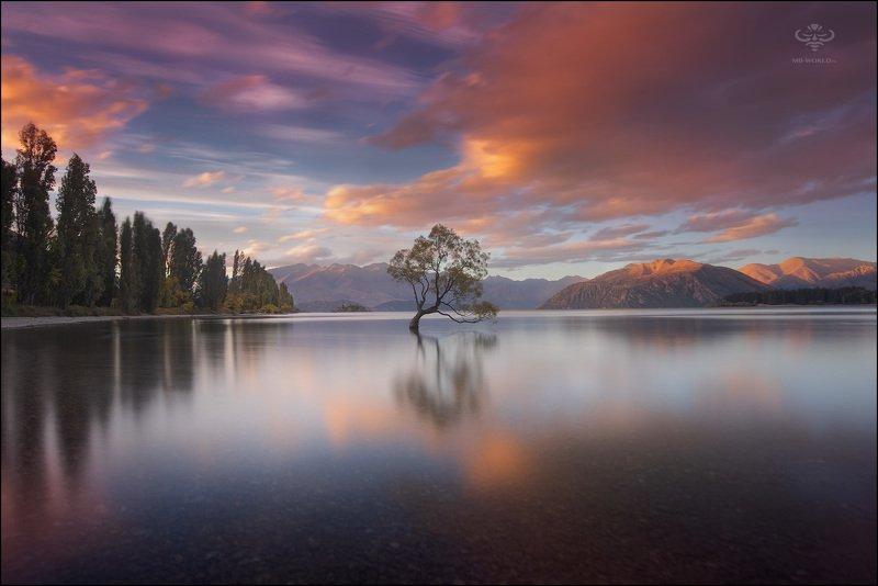 Новая Зеландия То самое знаменитое дерево в новой Зеландии...photo preview