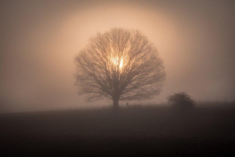 tree, sun, fog, mist, sunrise, light, nature, landscape Kings Crownphoto preview