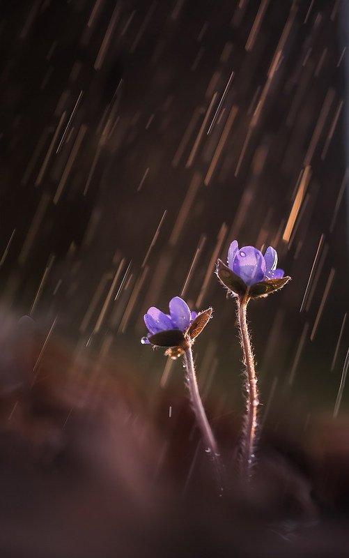 Весной дождь пахнет надеждойphoto preview