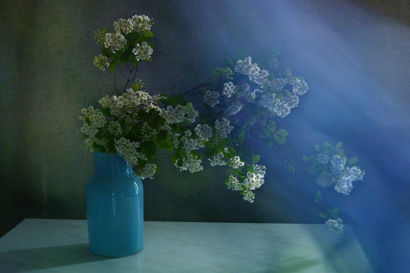 натюрморт,композиция,свет,лето,букет,спирея Через органзу..photo preview