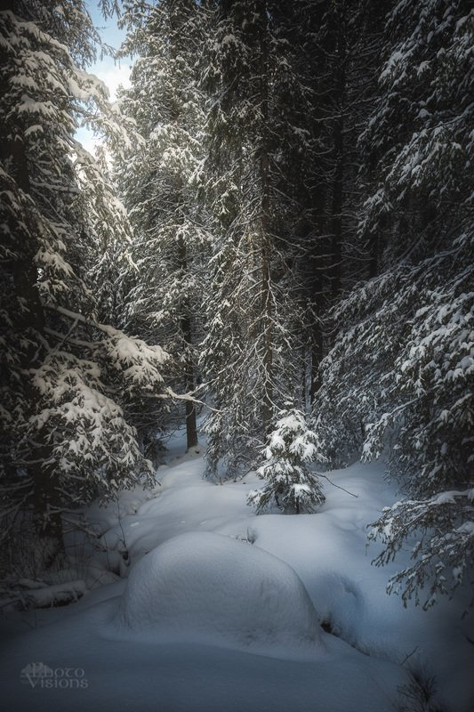 forest,woods,woodland,boreal,norway,norwegian,north,snow,snowy,winter,wintertime Winter mountain forest.photo preview