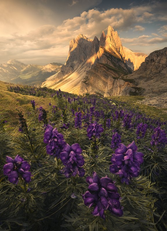 "#landscape, #dolomites, #italy, #fineart, #sunset ""Aconitum Napellus""photo preview"