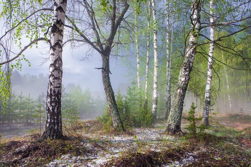 Весенний лес после грозы с градом 2photo preview