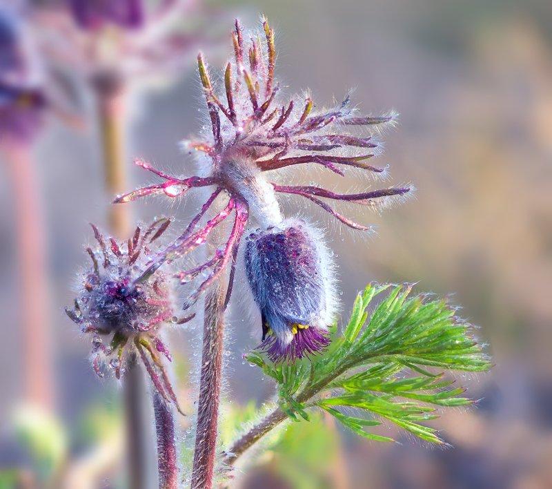весна, цветы, сон-, трава Пастельная акварель, веснаphoto preview