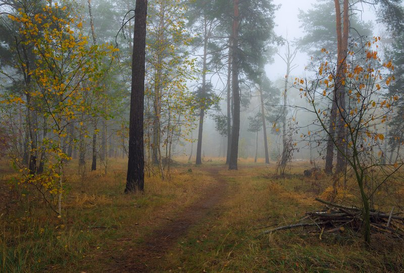 лес, осень, ноябрь, туман Предзимняя осенняя пораphoto preview