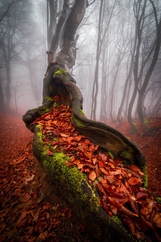 tree, fog, autumn, fall, leafs, trees, forest, wodland, nature, landscape Magical treephoto preview