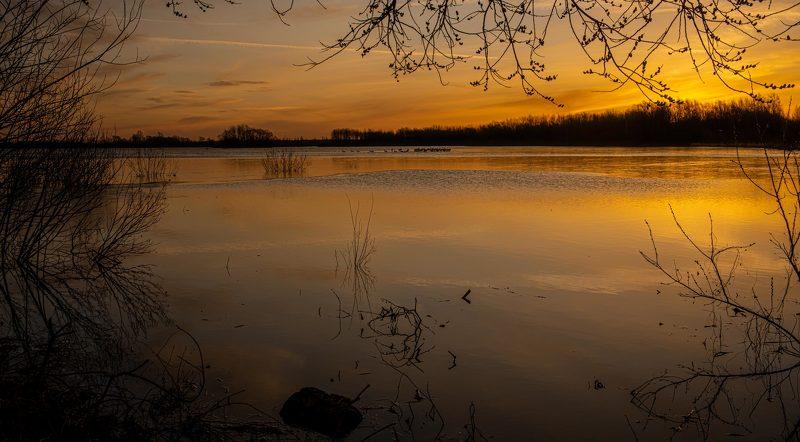 Лебединый рассвет.photo preview