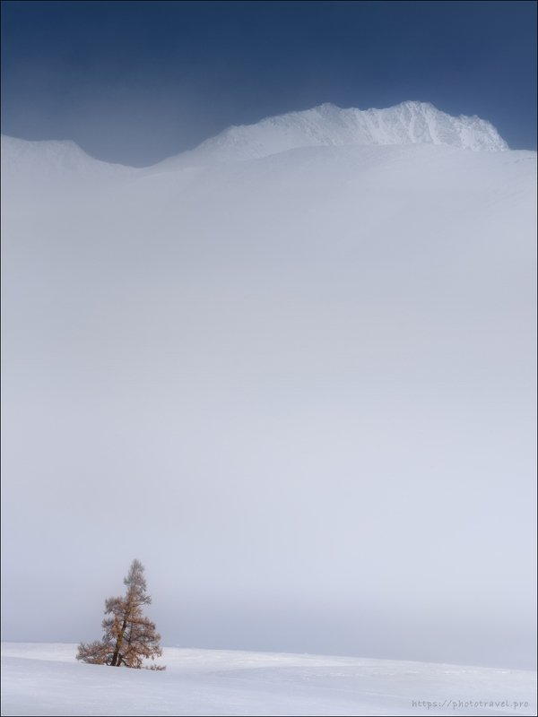 алтай, курайская степь, курайский хребет, зима, Из жизни одиноких деревьев ..photo preview
