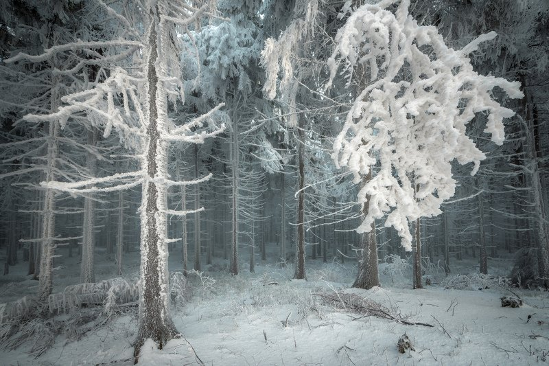 forest, trees, tree, ice, snow, cold, fog, mist, winter, nature, landscape Frozen Forestphoto preview