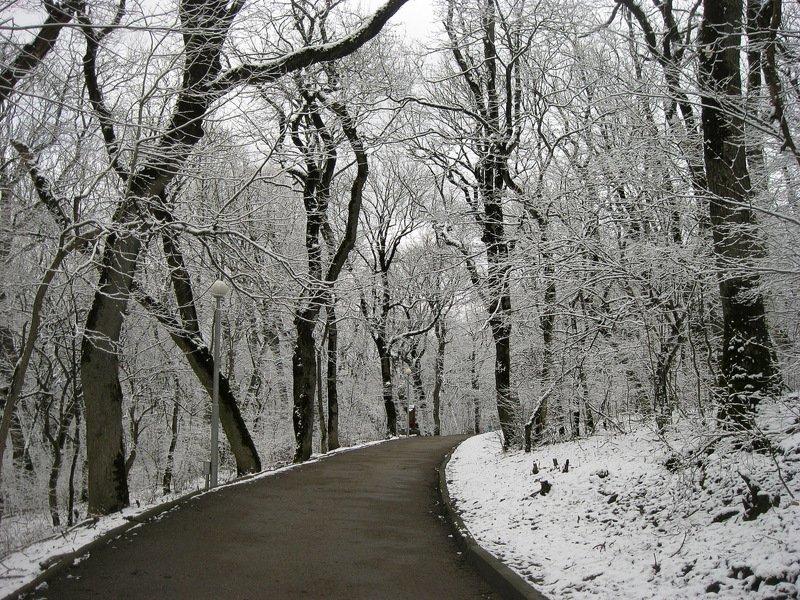 Белые аллеиphoto preview