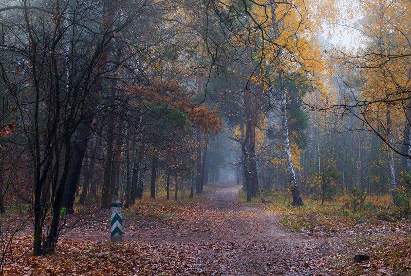 лес, осень, ноябрь, туман, сумерки Сырой ноябрьphoto preview