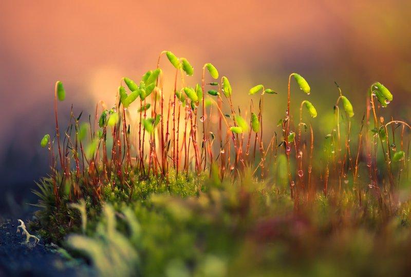 весна, мох Красота под ногами 2photo preview