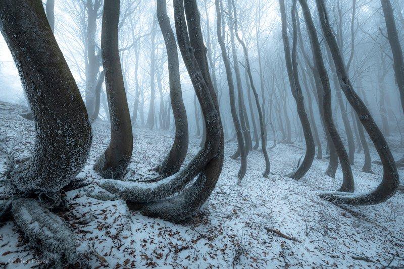 forest, trees, winter, ice, snow, clod, fog, mist, nature, landscape Frozen Octopusphoto preview