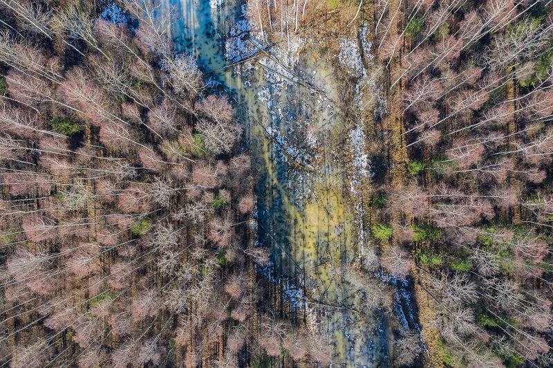real wildlife, wildlife, nature, forest, wildlife photographer, air photo, sa_travelmedia, aleksejs_saripins, abstract, spring, \