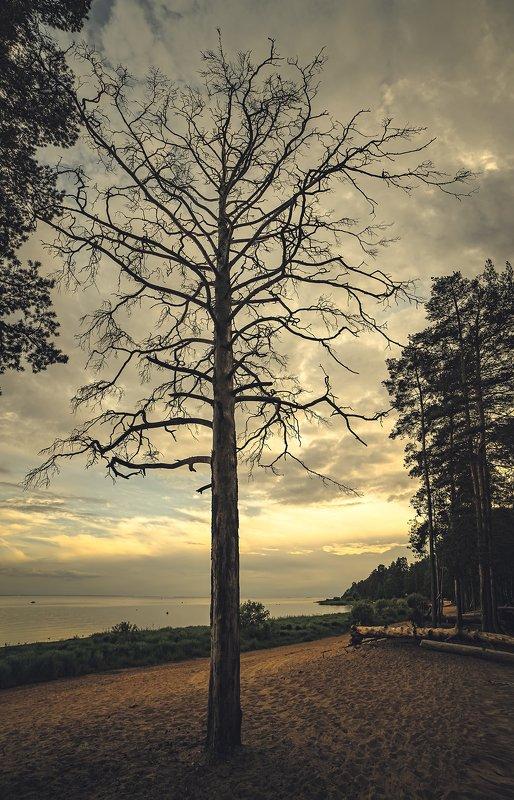 Дерево...photo preview