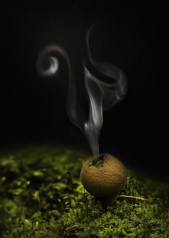 гриб, дождевик, споры, выброс Извержениеphoto preview