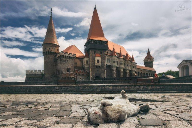 румыния, замок корвинов, кот, romania, corvin castle И пусть весь мир подождет ...photo preview