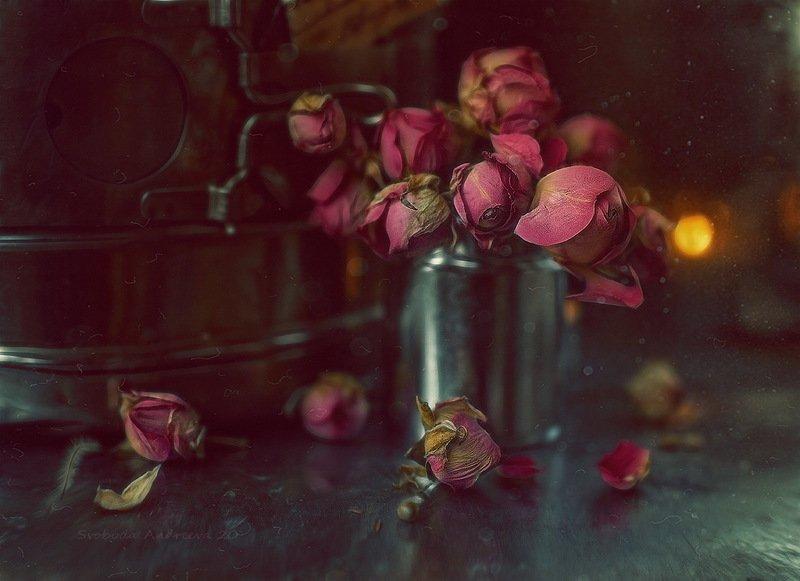 роза печали*photo preview