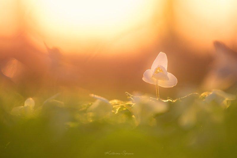 весна, макро, природа, цветы Весенний сонphoto preview