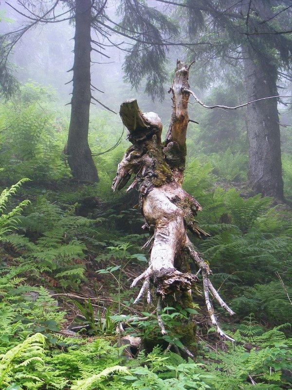 карпаты. горы, украина, лес, красиво, лето, туман, Страж карпатских лесов.photo preview