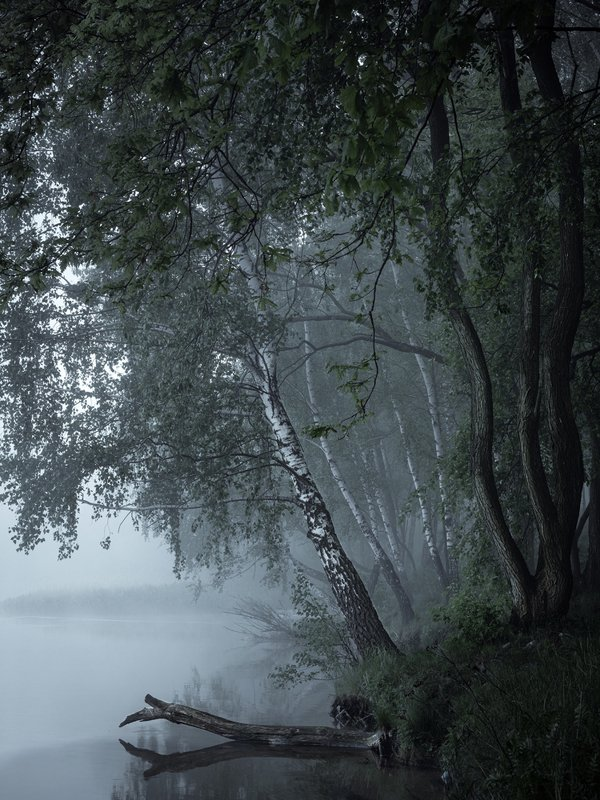 loneliness, silent, dark, gloomy, foggy, fog, morning, landscape, lake Lonelinessphoto preview