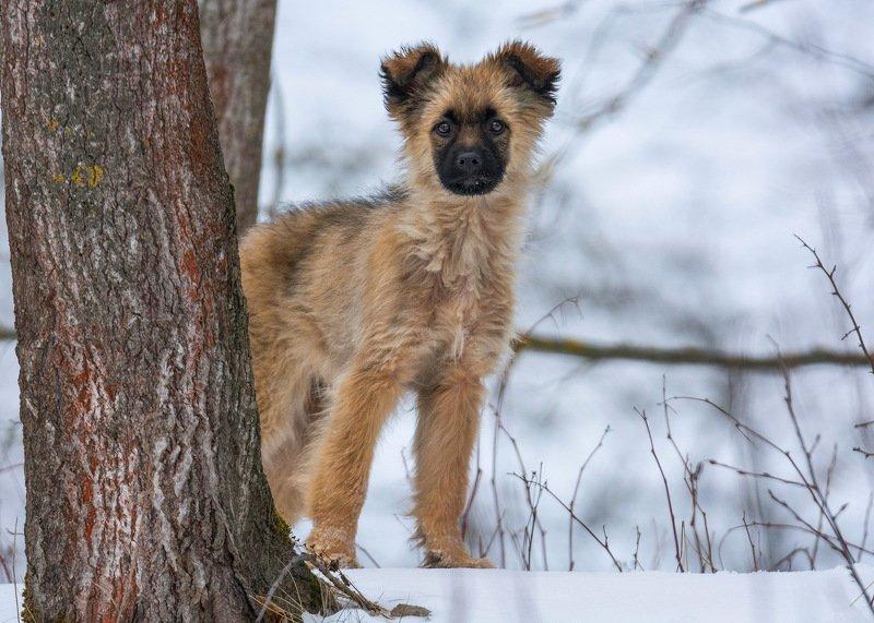 собака животные природа Собака-обезьяка))photo preview