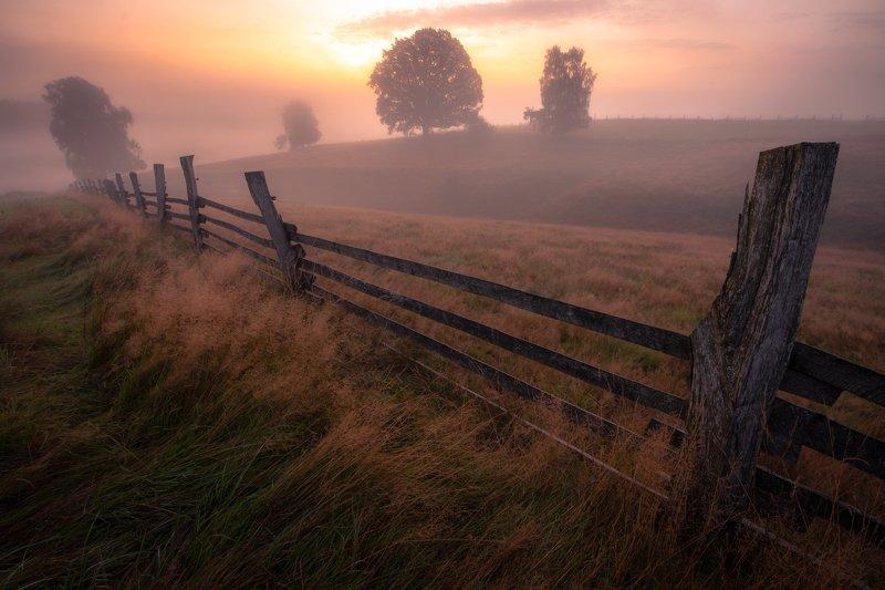 landscape, nature, sunrise, fog, mist, meadow, fence, autumn, trees, tree,  Sunrise in meadowsphoto preview