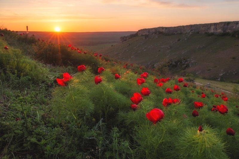 закат, солнце, пейзаж, весна, горы, пионы, цветы, красота, путешествие, крым, белая скала, ак-кая Красивый закат в Красной балке у подножия Белой скалы (Ак-Кая).photo preview