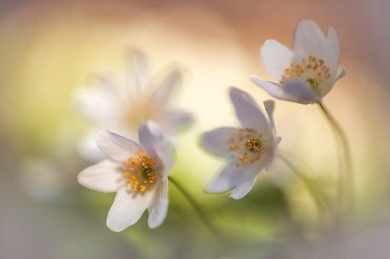 Нежность. Она как веснаphoto preview