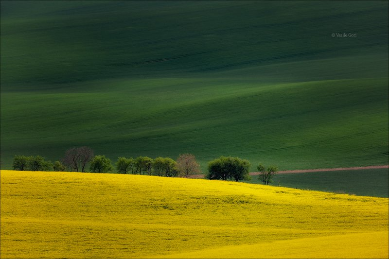 южная моравия,пейзаж,деревья,линии,south moravian,lines,свет,czech,весна,чехия,landscapes,поле,рапс La primavera arriverà...photo preview