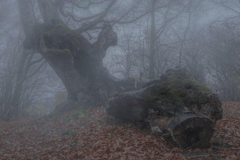 В заколдованном диком лесуphoto preview