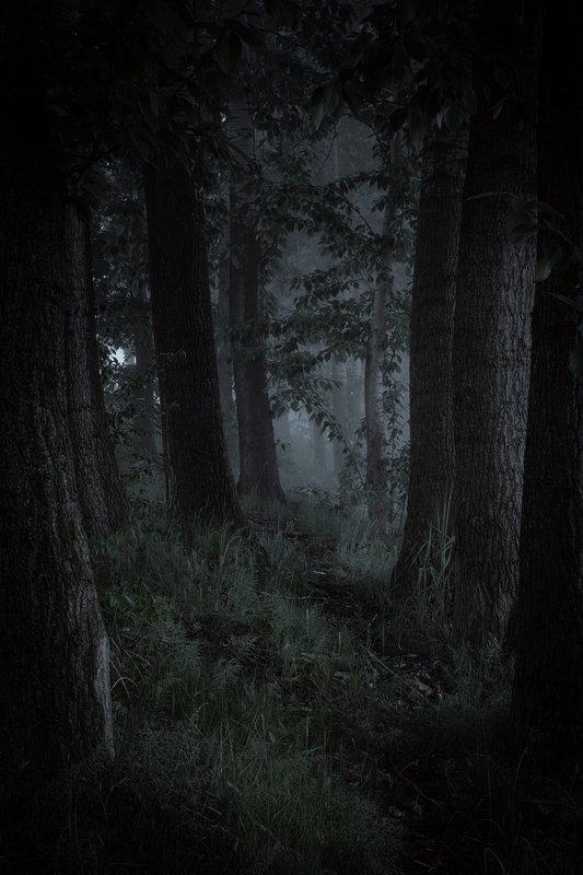 forest, dark, gloomy, landscape, pogoria, nature, foggy, moprning Dark forestphoto preview