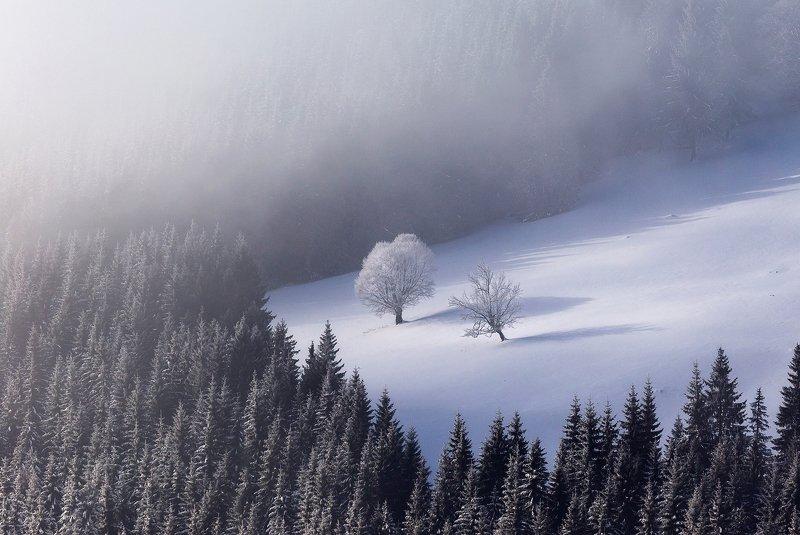 winter, trees, blizzard, snow, landscape, travel, nature, mountain, romania, cold, sunrise, autumn, spring, summer Warriorsphoto preview