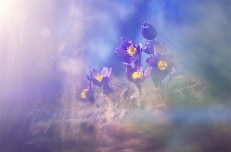 Весны волшебство.photo preview