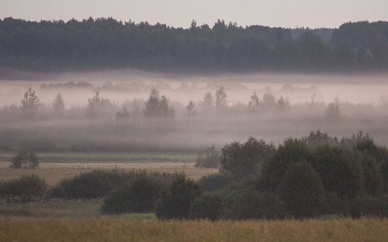 рассвет,туман,утро,поле,лес,природа, landscape, nature,fog, sunrise, woodland Туманный рассветphoto preview