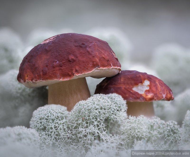 грибы, макро Тихая охота в Белом море...photo preview