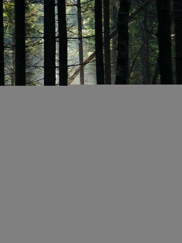 лес, утро, туман, красота, грибы, осень, Утро в лесу.photo preview