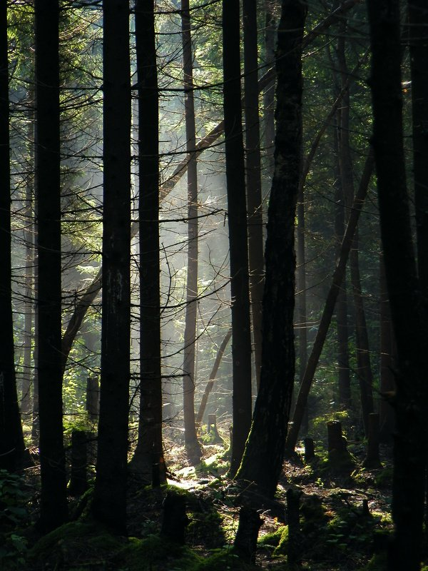 утро, лес, туман, осень Утро в лесу.photo preview