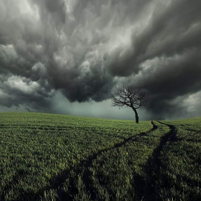 Lithuania, tree, sky, clouds, field, storm *photo preview