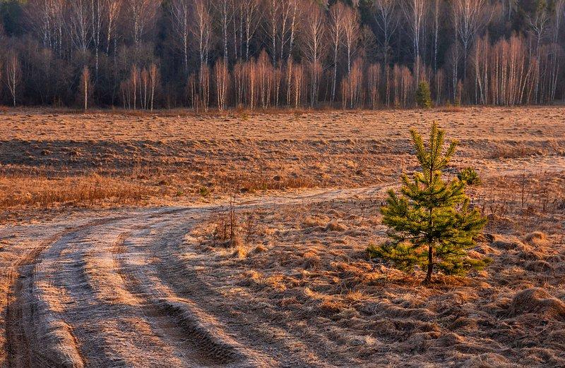 средняя, полоса, россии, рассвет, март, весна Рассветphoto preview