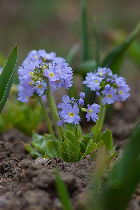 Первые цветы на огородеphoto preview