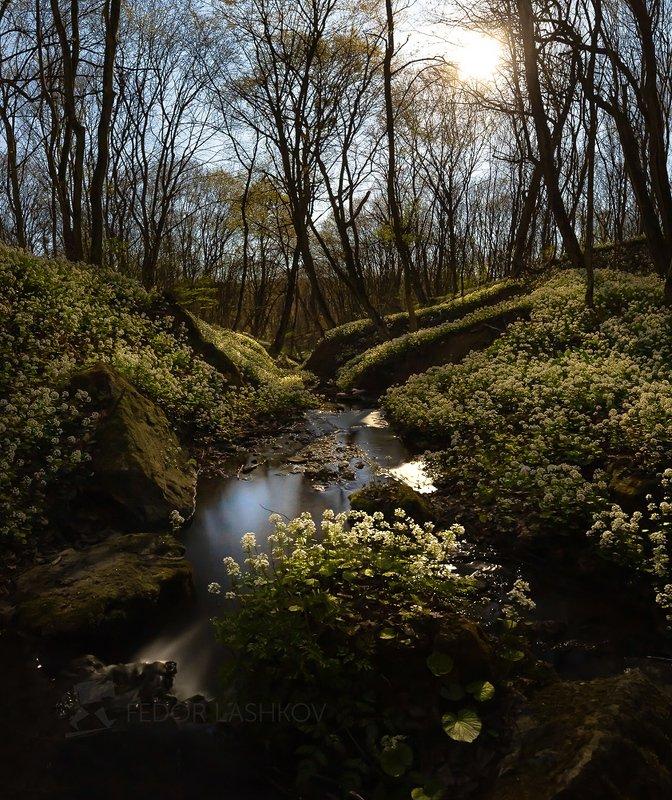 ставропольский край, путешествие, цветы, природа, флора, толстостенка крупнолистная, цветок, первоцветы, в лесу, лес, весна, ручей, луна, полнолунье, ночь, камни, лесное, Весенняя лунная ночьphoto preview