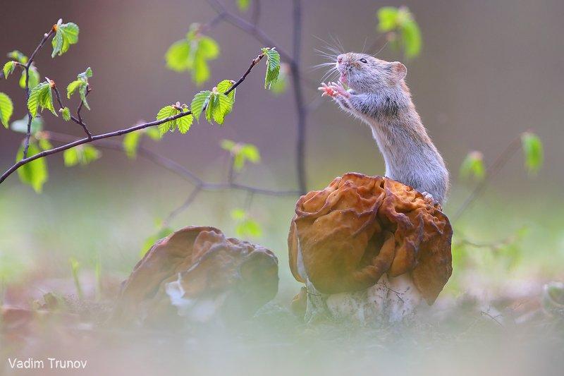 мышь, строчок, весна После голодной зимыphoto preview